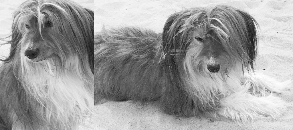 Unser Agenturhund Tinka